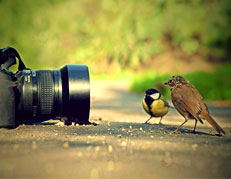 Randeep Singh the wildlife photograher's contacts